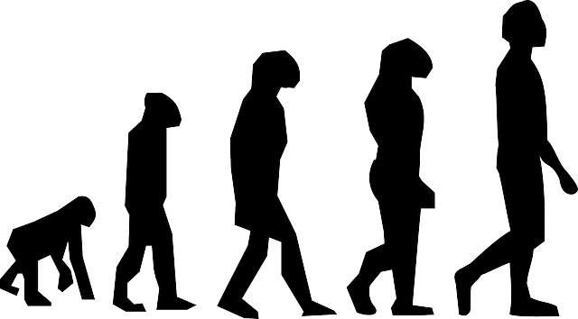 evolution graphic
